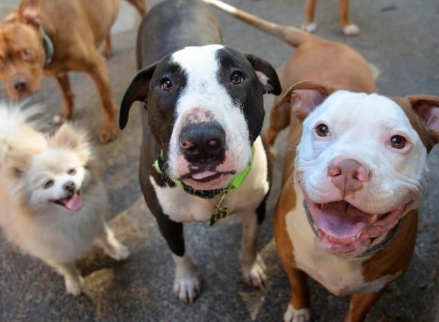 perros mirando a camara