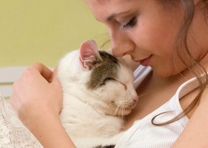gato amor