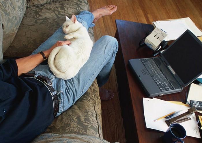 gato en casa salud