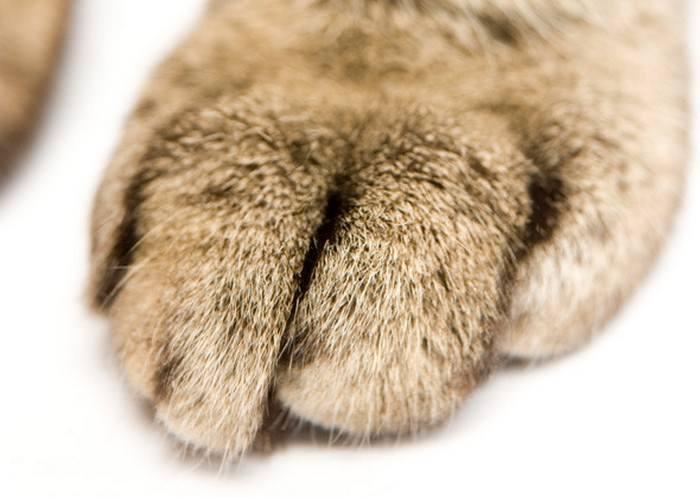 corazon y patas de gato