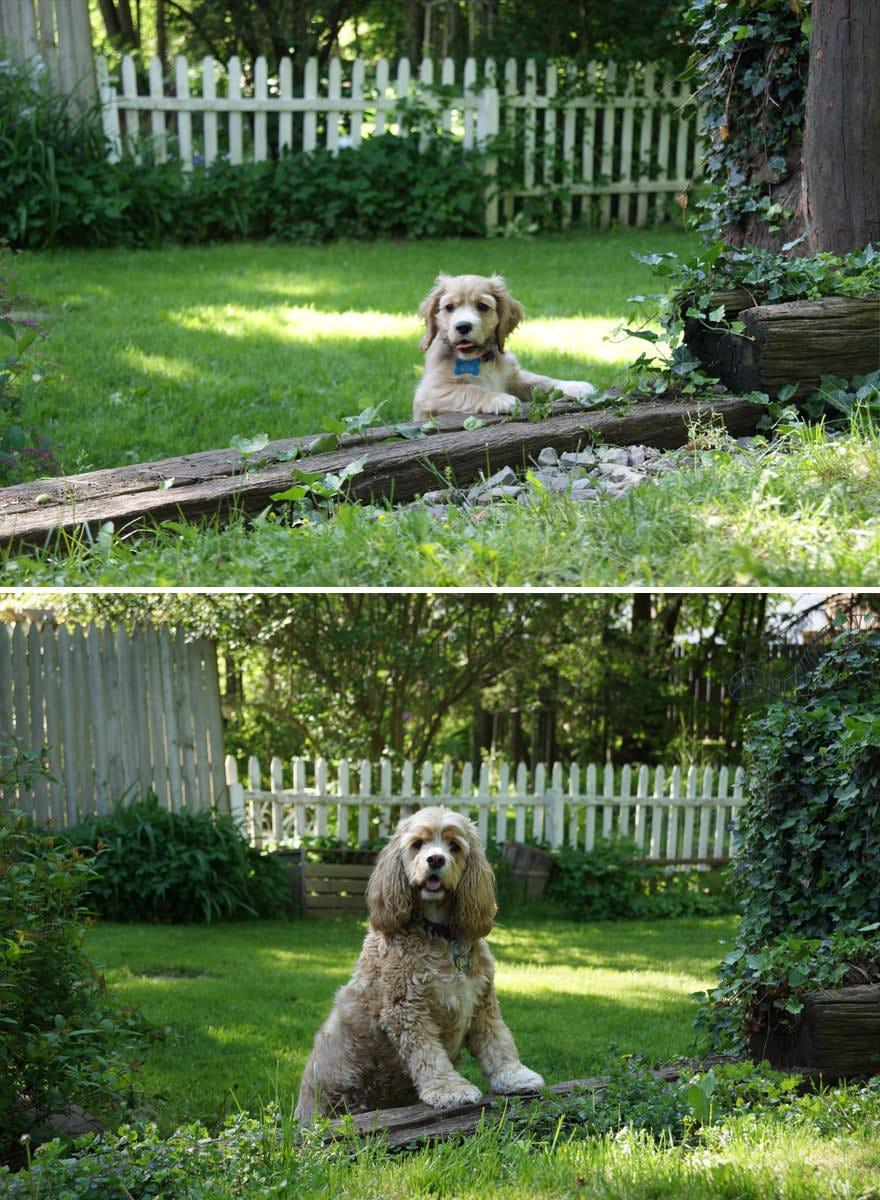 perro vigilando el jardin