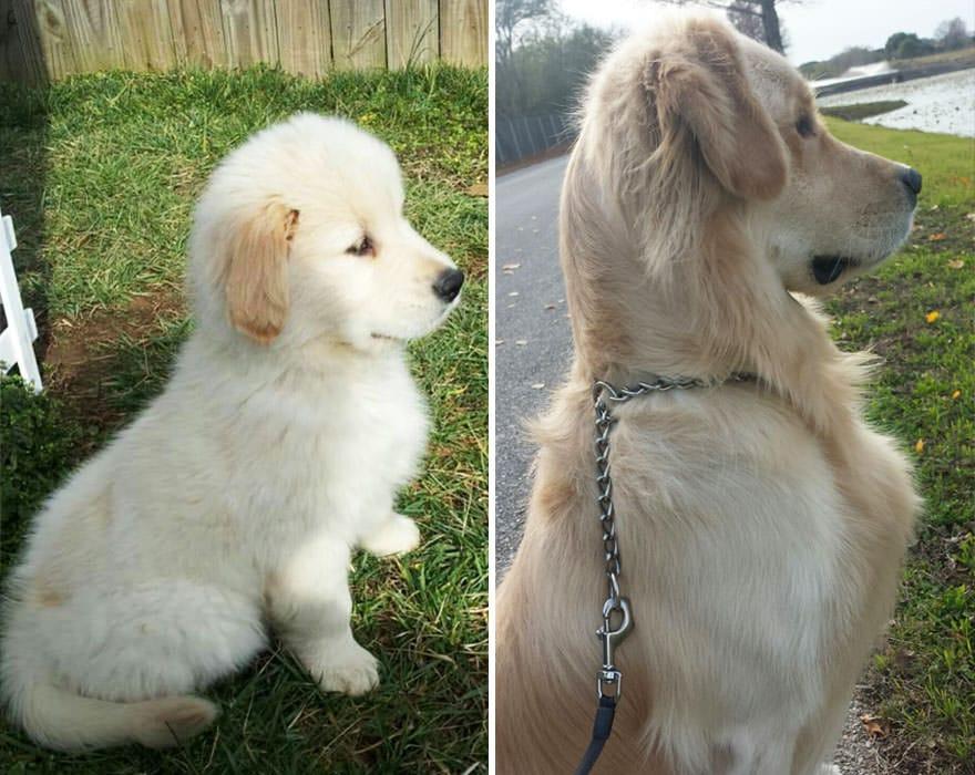 perro cachorro perro dos años