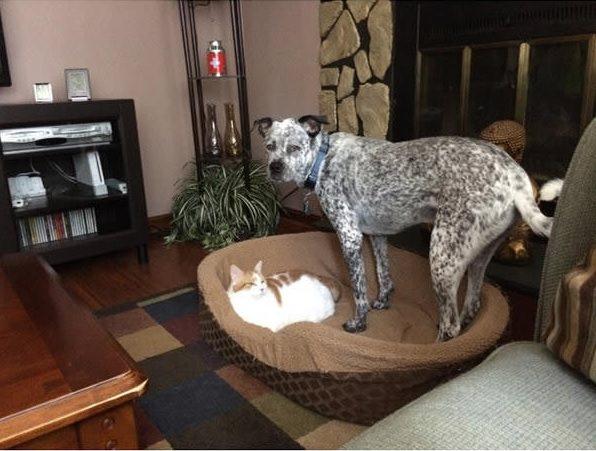 gato cama perro grande