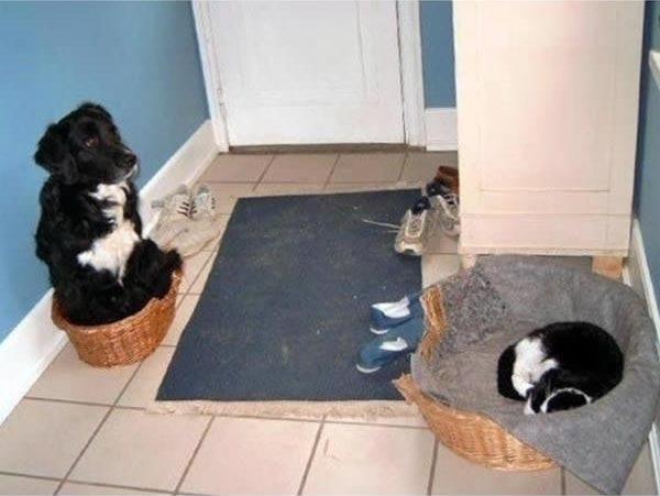 perro miedo al gato