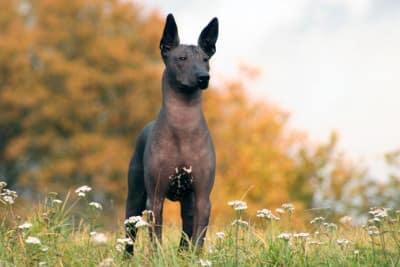 Die 10 lustigsten Hunderassen der 01