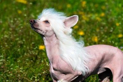 Die 10 lustigsten Hunderassen der 04