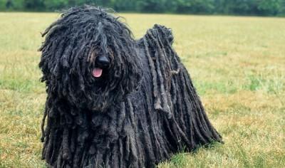 Die 10 lustigsten Hunderassen der 05