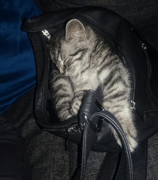 gato durmiendo en una maleta
