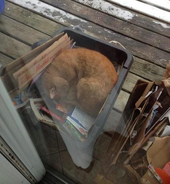 gato durmiendo en la basura