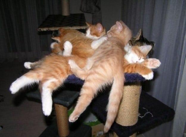 gatos durmiendo sobre un rascador