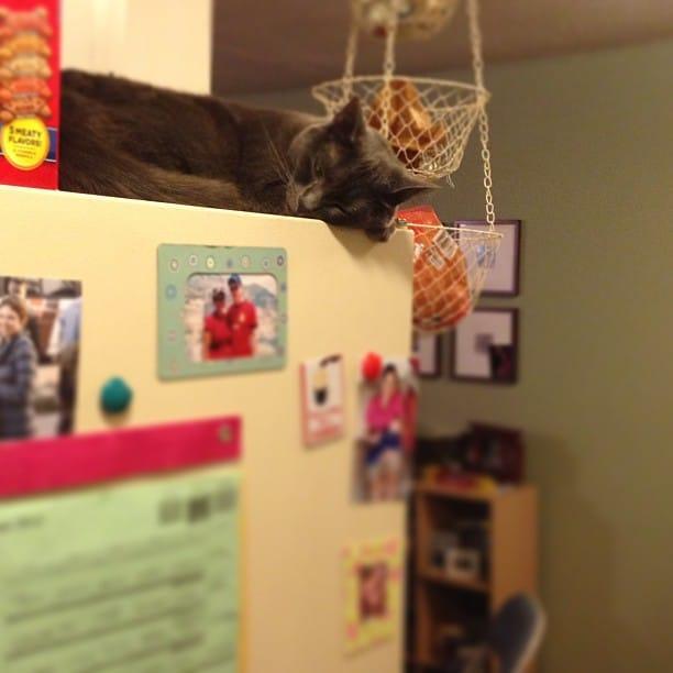gato durmiendo en la nevera