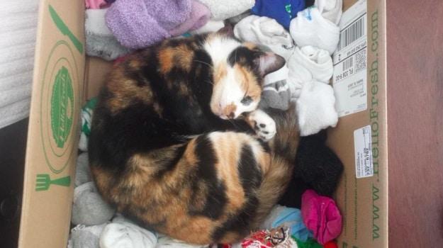 gato durmiendo en la cesta de la ropa sucia