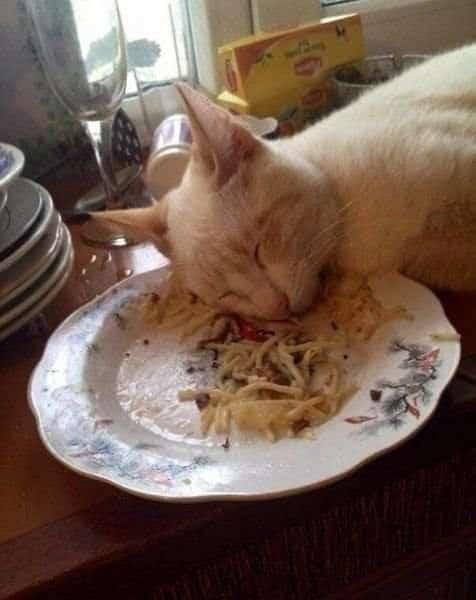 gato durmiendo sobre un plato de pasta