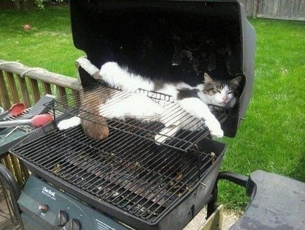gato dormido sobre la barbacoa