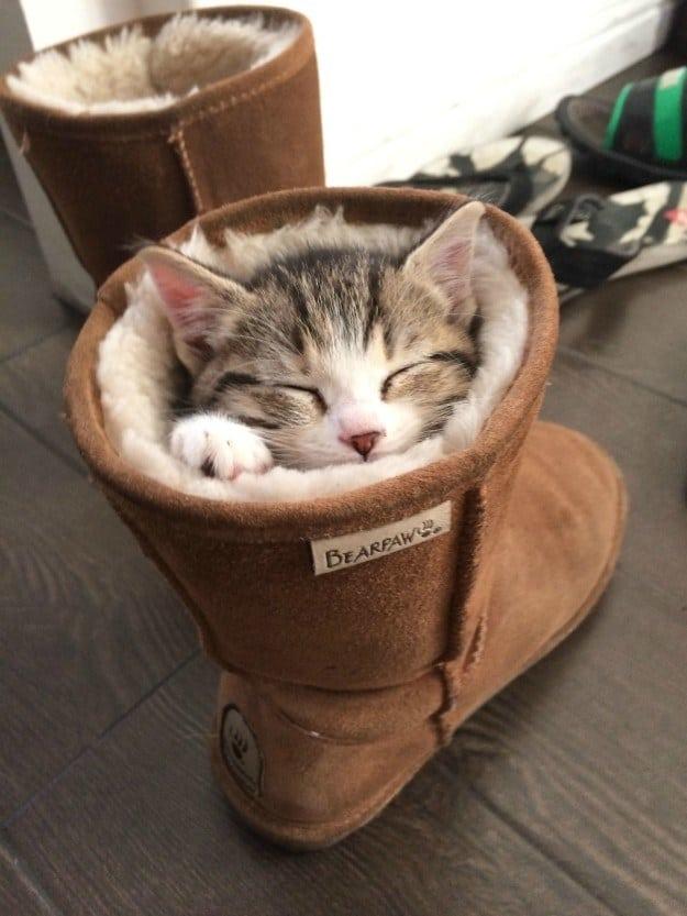 gato durmiendo en una ugg