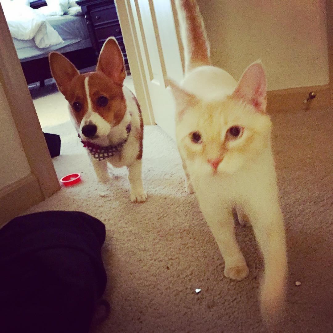 perro y gato blanco paseo
