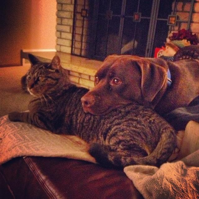 perro y gato viendo la tele juntos