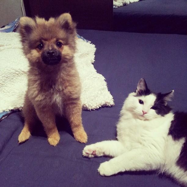 perro y gato haciendose una foto
