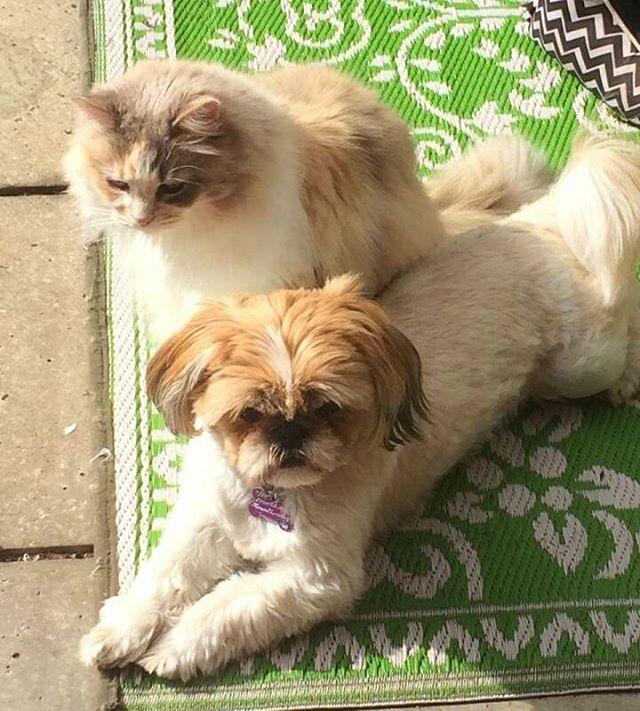 perro y gato disfrutando de la vida