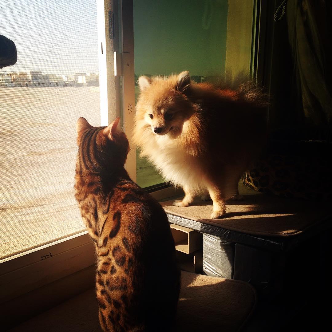 perro y gato en la ventana