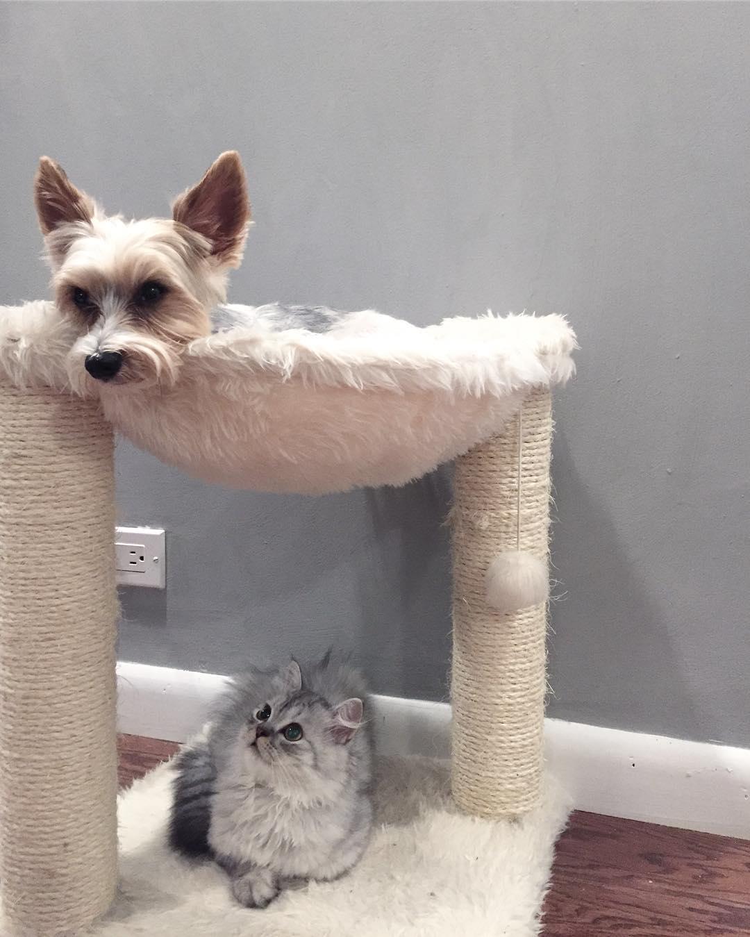 perro jugando con el rascador de un gato