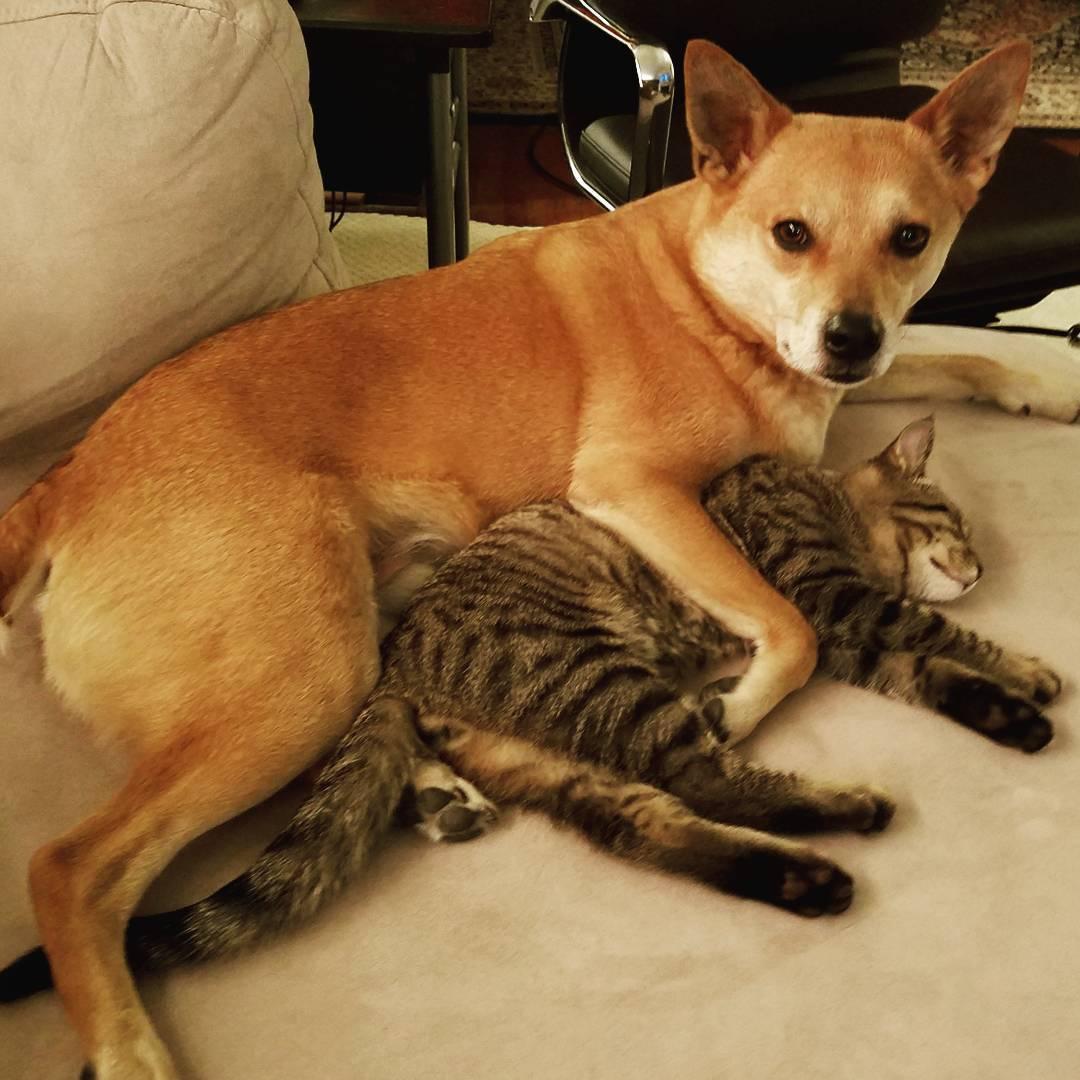 perro abrazando al gato