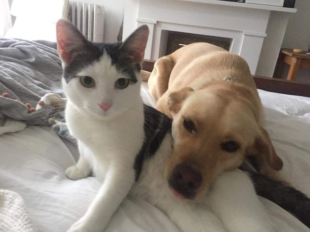 perro y gato en la cama