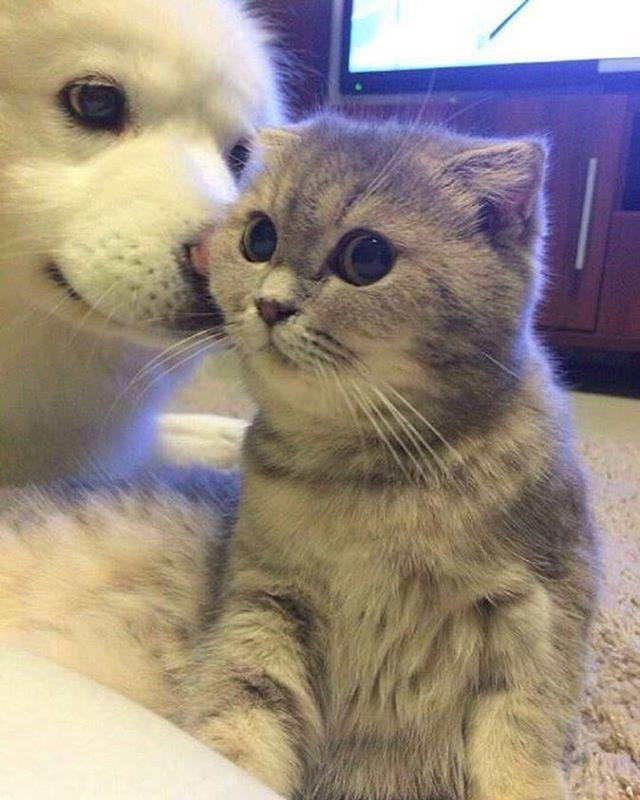 perro y gato besito