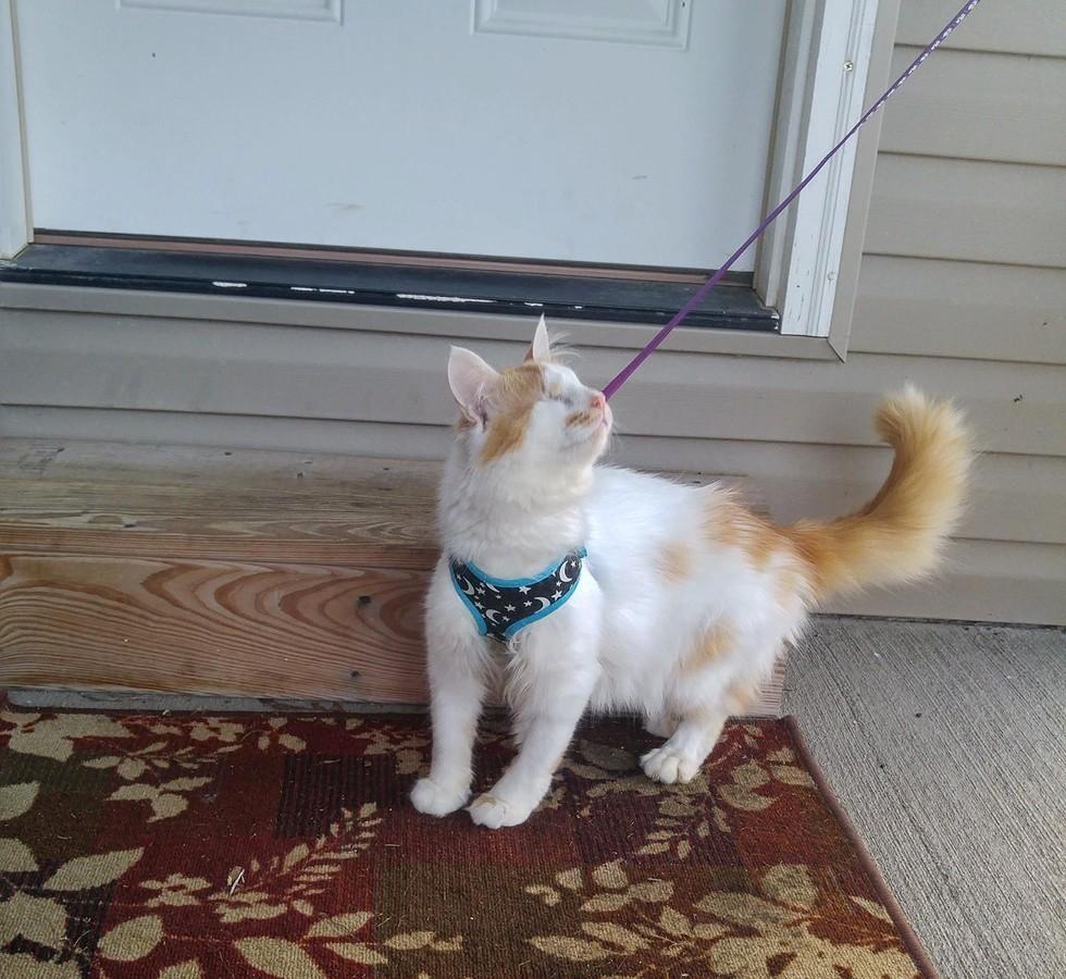 gato ciego martin con correa