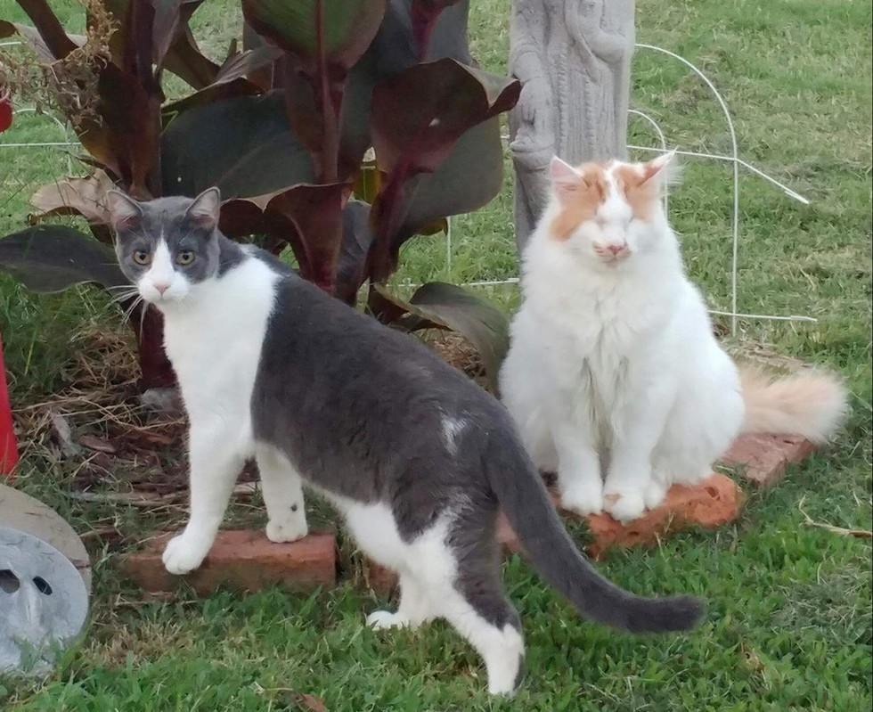martin gato ciego nuevo amigo