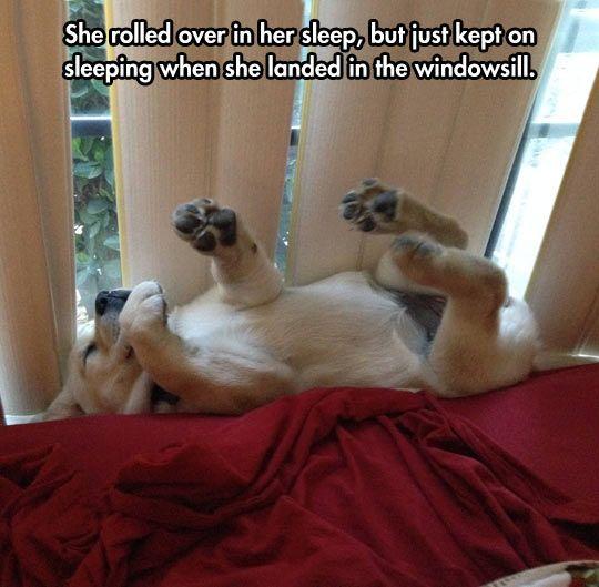 cachorro durmiendo y soñando