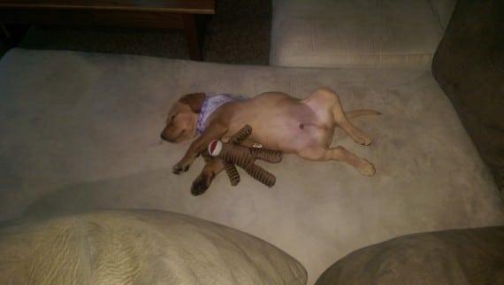 cachorro durmiendo con juguete