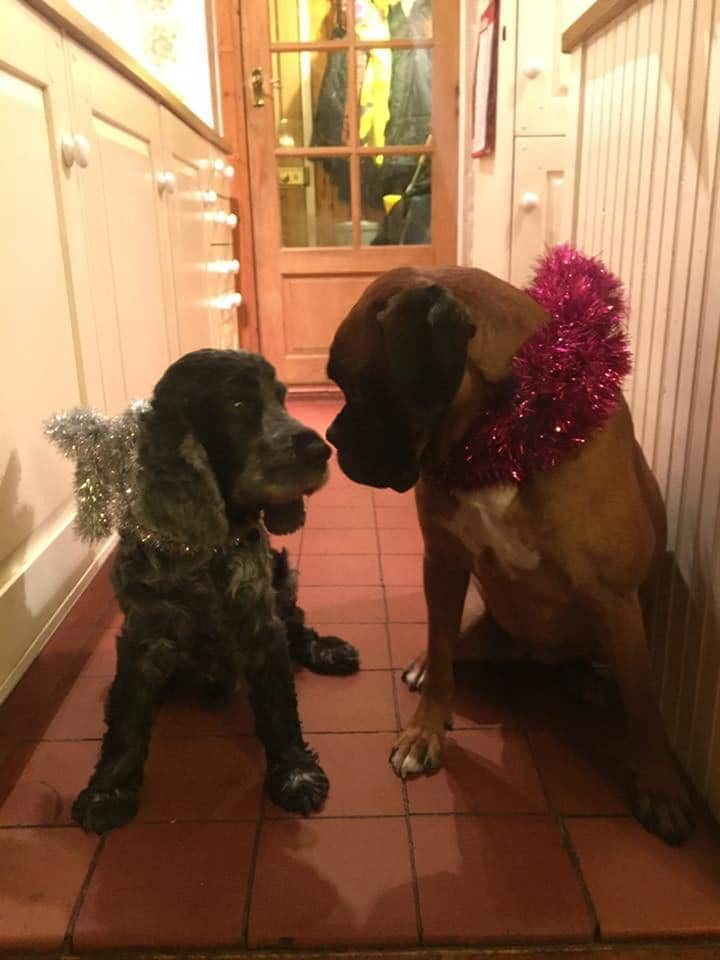 perros disfrazas de navidad
