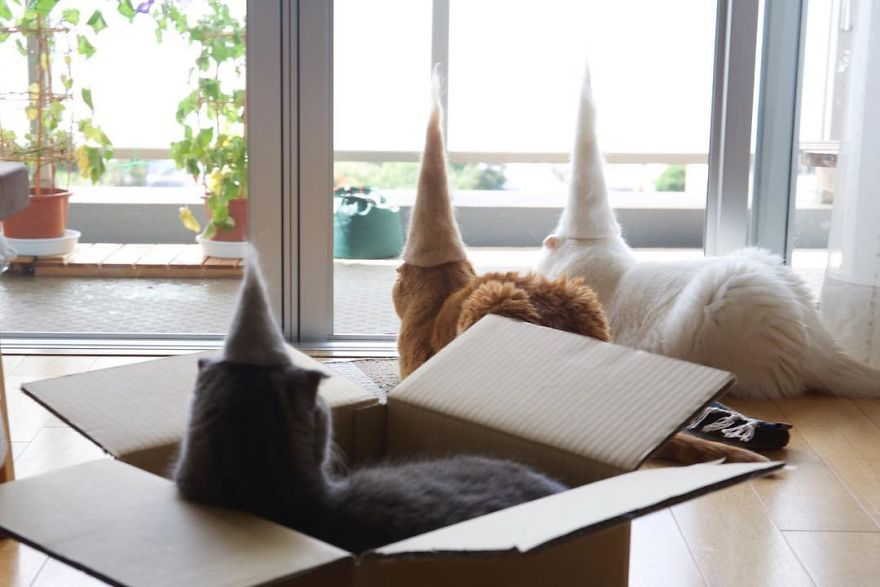 fotos gatos Ryo Yamazaki sombreros de fiesta