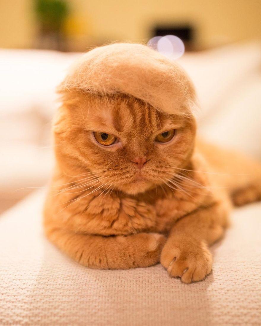 gato enfadado sombrero
