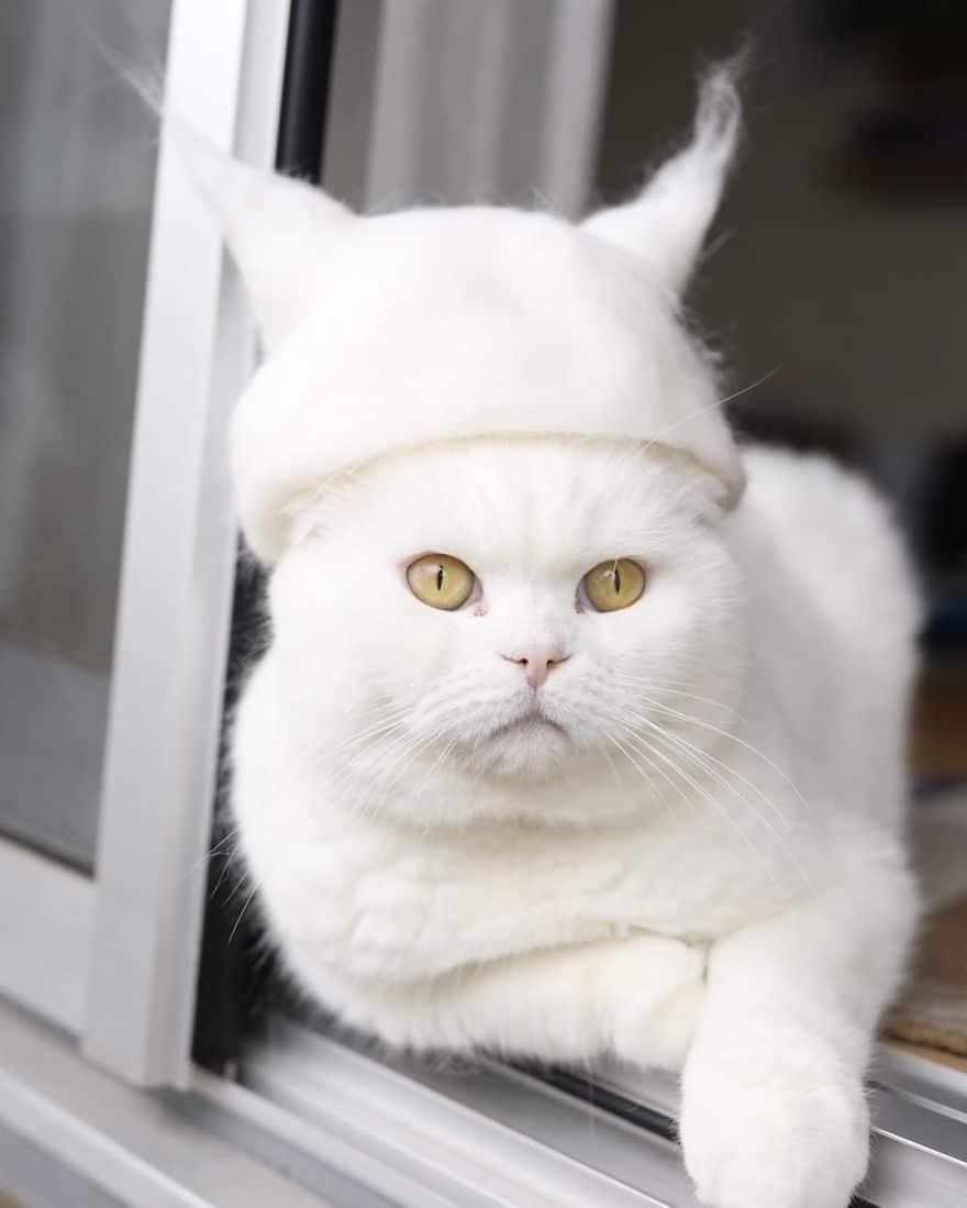 gato blanca sombrero