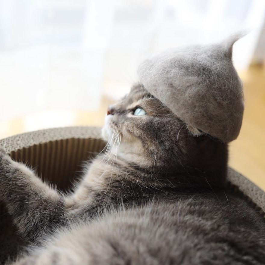 gato gris sombrero ventana