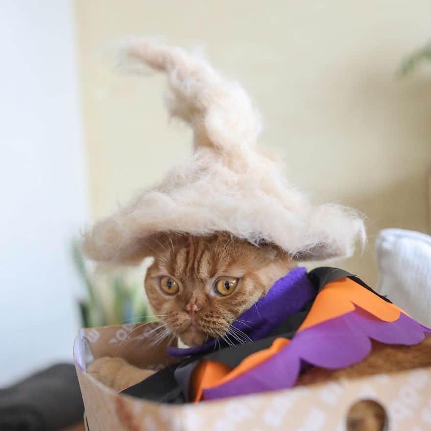 gato sombrero mexicano