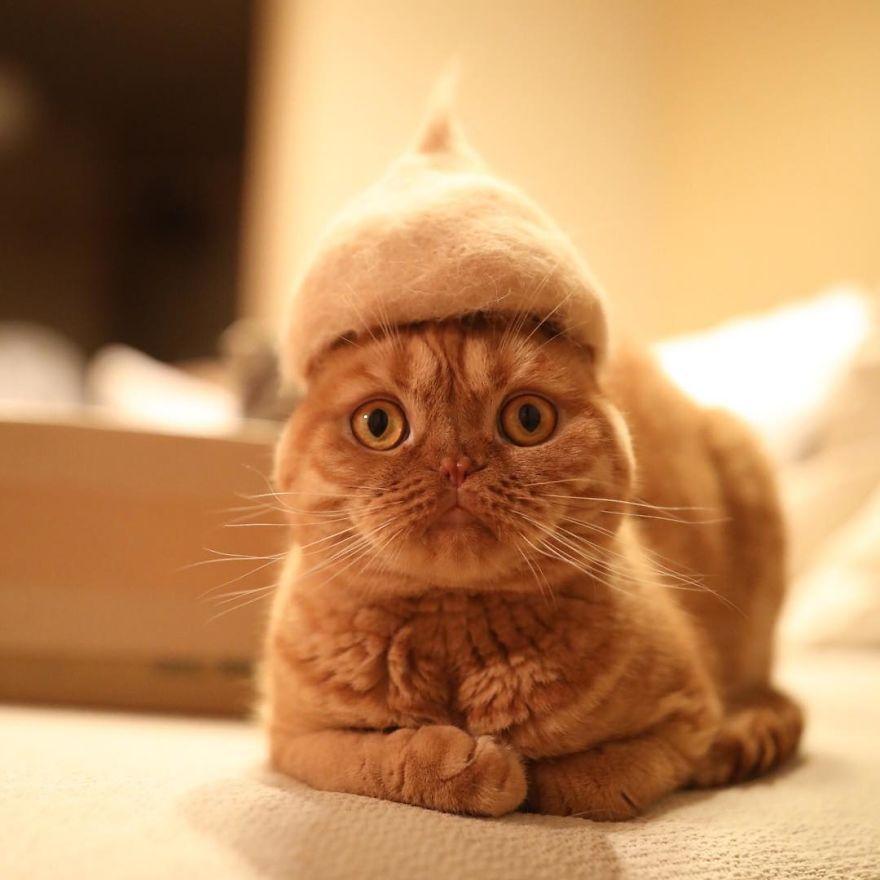 gato sombrero adorable