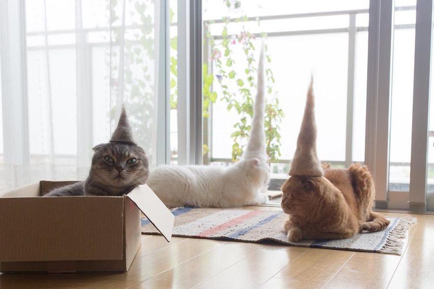 gatos sombrero fiesta casa