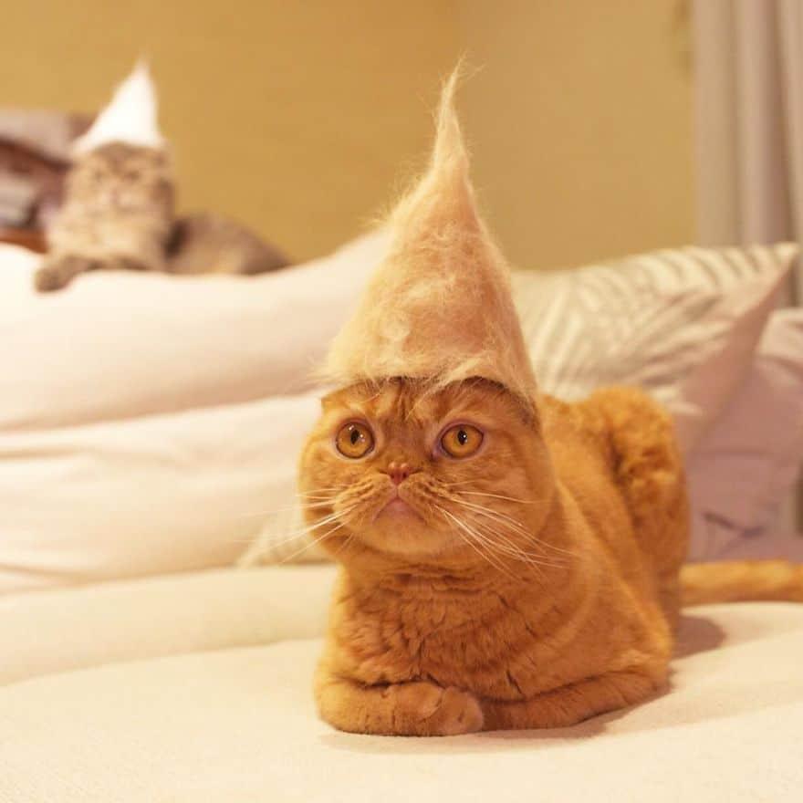 gato sombrero reflexionando cama