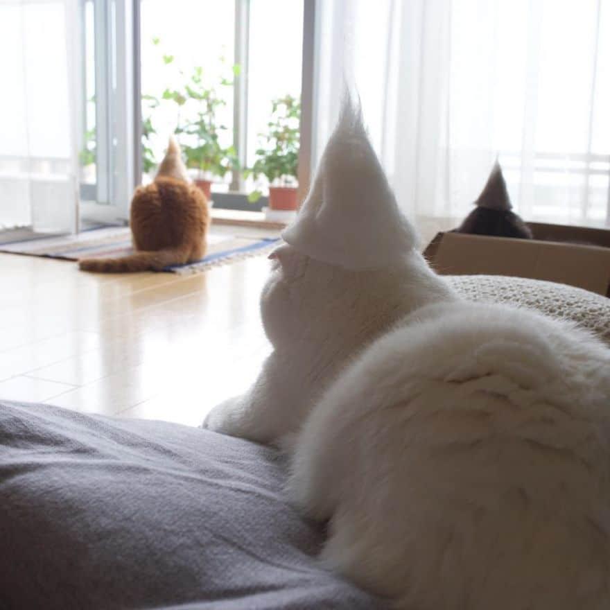 gatos cama con sombreroRyo Yamazaki