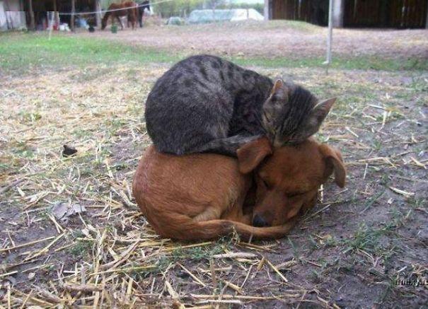 perro y gato durmiendo juntos