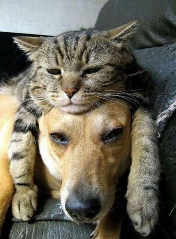 gato sobre perro