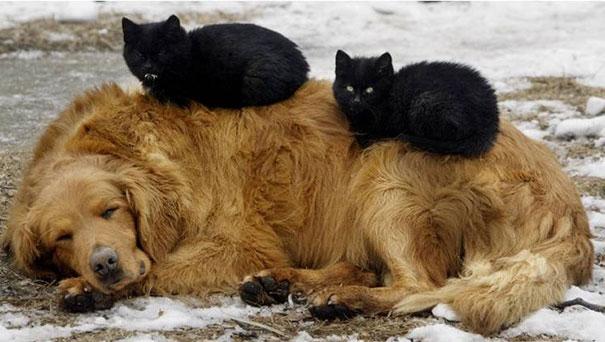 gatos negros durmiendo con perro