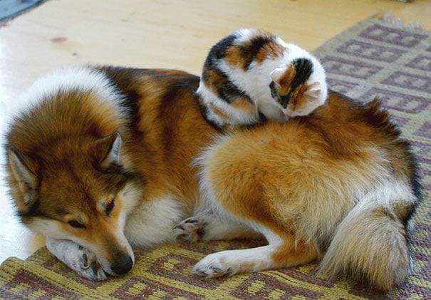 perro y gato identicos