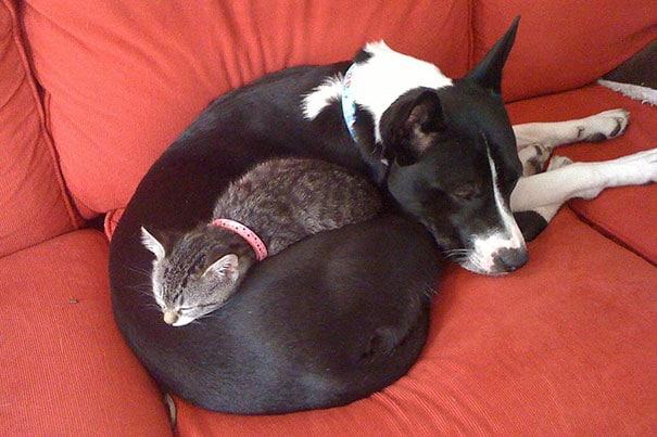 gato durmiendo con perro marmotas