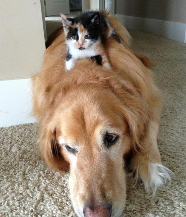 perro y gato siesta