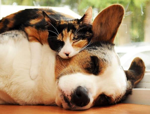 gato y perro durmiendo como marmotas