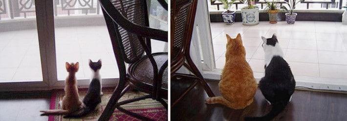 pareja gatos canijos y gatos gordos